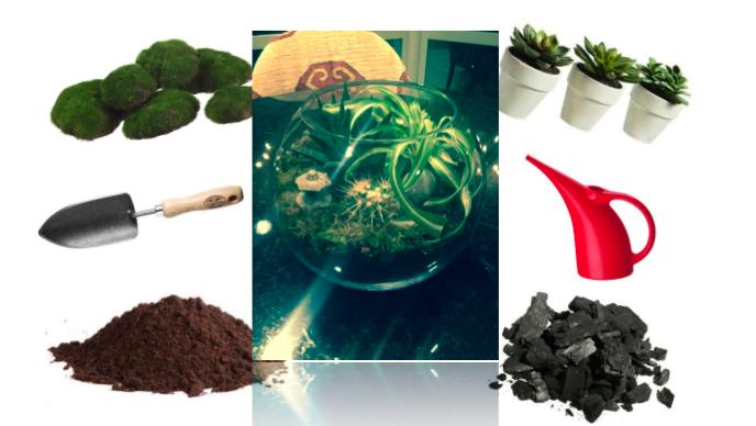 Terrarium Garden Planting Materials
